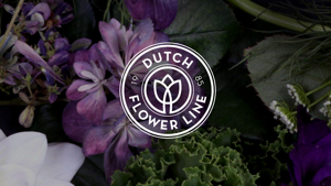Dutch Flower Line
